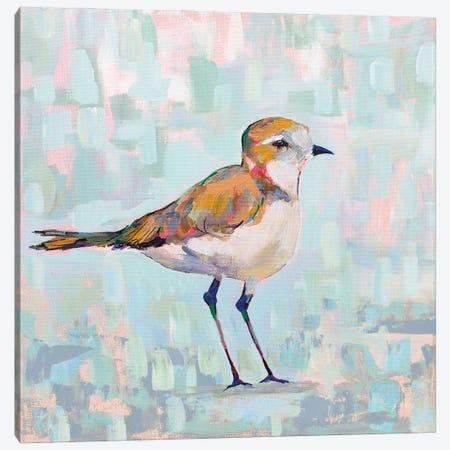 Coastal Plover III Neutral Canvas Print #JVE127} by Jeanette Vertentes Canvas Art Print