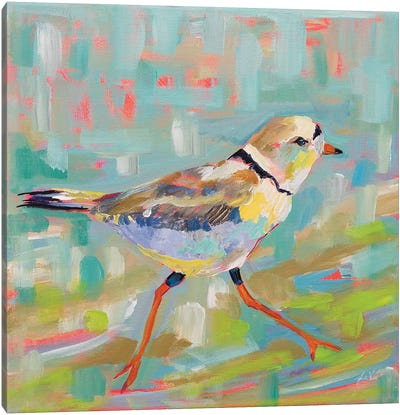 Coastal Plover I Canvas Art Print