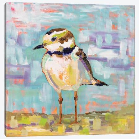 Coastal Plover II Canvas Print #JVE59} by Jeanette Vertentes Canvas Print