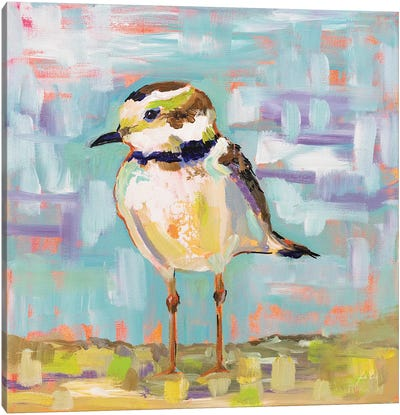 Coastal Plover II Canvas Art Print