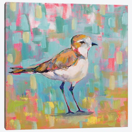 Coastal Plover III Canvas Print #JVE60} by Jeanette Vertentes Canvas Wall Art