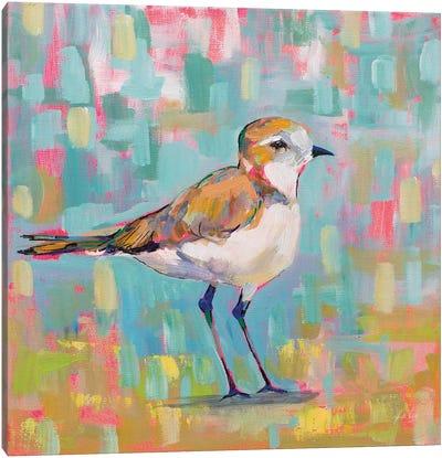 Coastal Plover III Canvas Art Print
