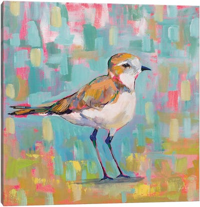 Coastal Plover III Canvas Art Print