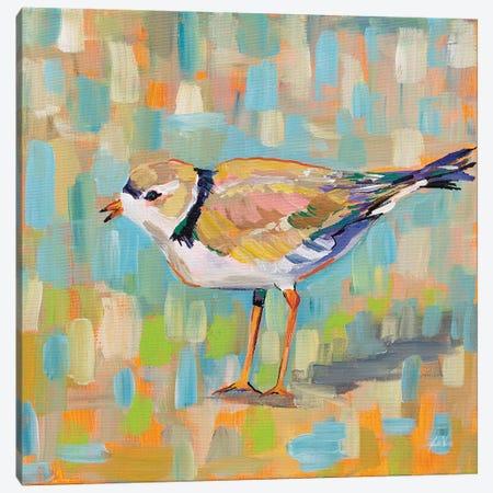 Coastal Plover IV Canvas Print #JVE61} by Jeanette Vertentes Canvas Artwork