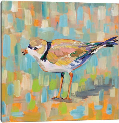 Coastal Plover IV Canvas Art Print
