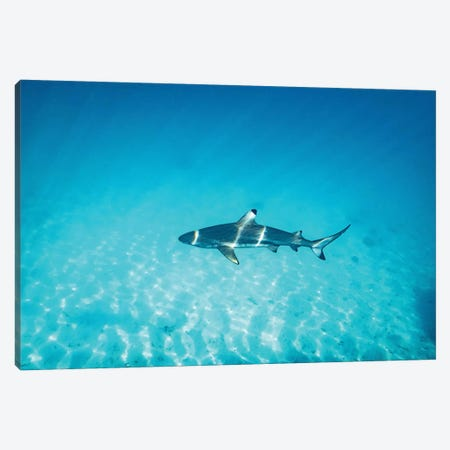 Sun Rays Reef Shark Canvas Print #JVO177} by James Vodicka Canvas Wall Art