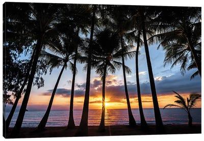 Sunrise Through Beach Palms Canvas Art Print