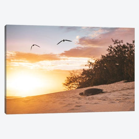 Sunrise Turtle On Beach Canvas Print #JVO181} by James Vodicka Canvas Wall Art