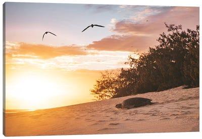Sunrise Turtle On Beach Canvas Art Print