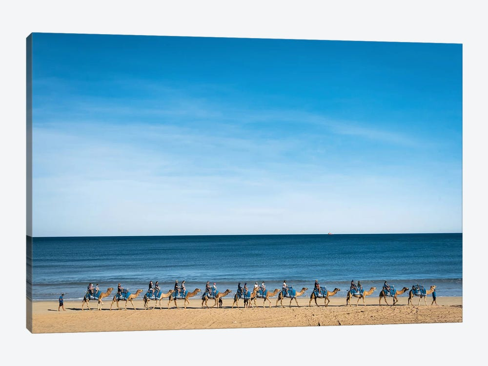 Cable Beach Camels by James Vodicka 1-piece Canvas Print