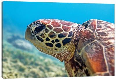 Turtle Head Nature Underwater Canvas Art Print
