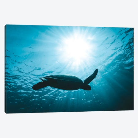 Turtle With Sun Rays Canvas Print #JVO212} by James Vodicka Canvas Artwork