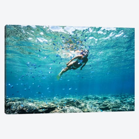 Underwater Bikini Snorkeller Coral Reef Fish Canvas Print #JVO215} by James Vodicka Canvas Print