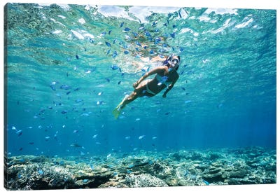 Underwater Bikini Snorkeller Coral Reef Fish Canvas Art Print