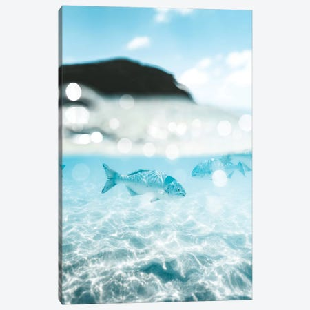 Underwater Fish 50/50 Half Split Shot Canvas Print #JVO216} by James Vodicka Canvas Print