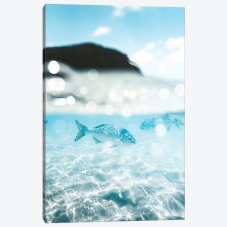 Underwater Fish 50/50 Half Split Shot Canvas Print #JVO216} by James Vodicka Canvas Print