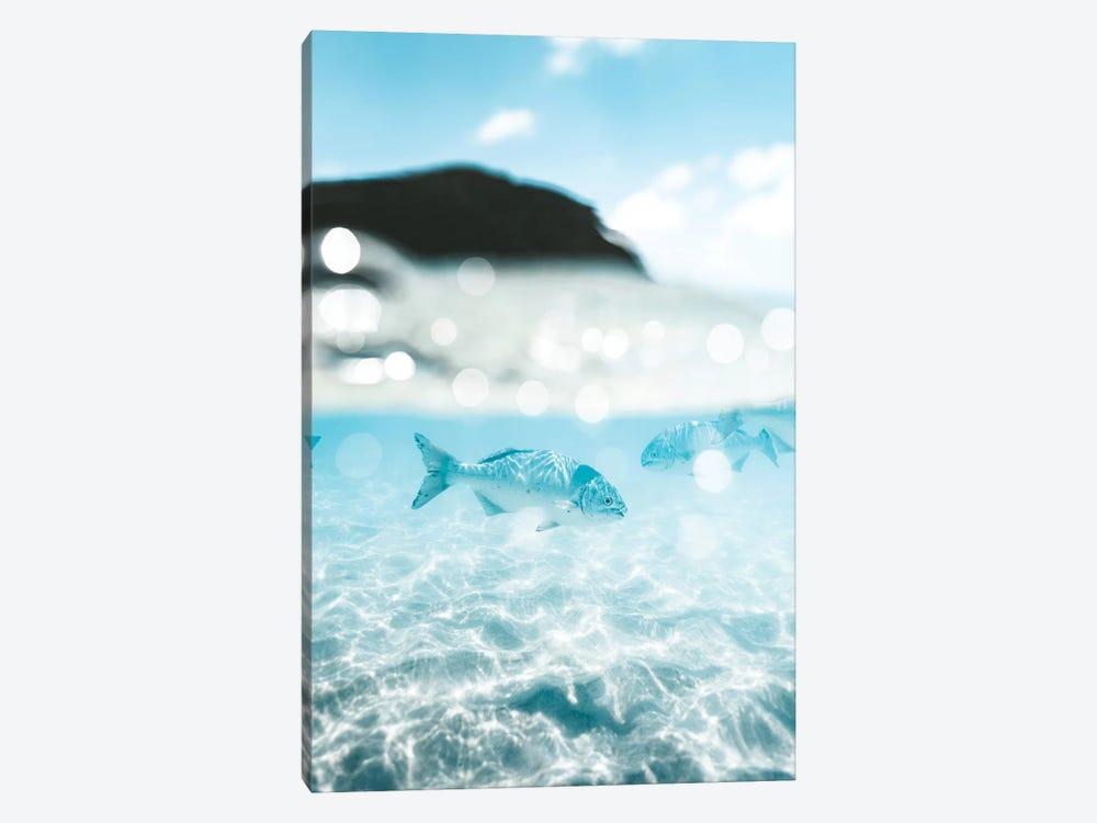 Underwater Fish 50/50 Half Split Shot by James Vodicka 1-piece Canvas Art