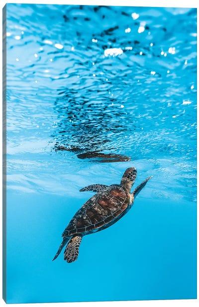 Underwater Little Turtle Canvas Art Print
