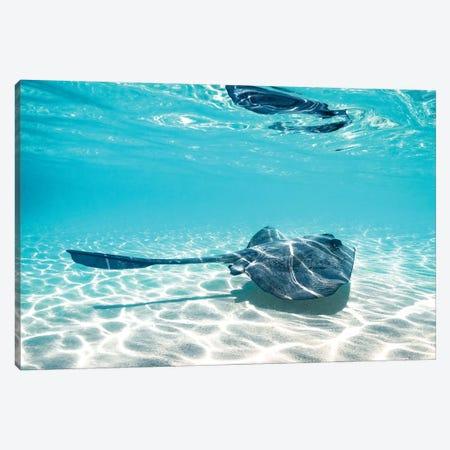 Underwater Ray Reef Snorkelling Canvas Print #JVO219} by James Vodicka Canvas Artwork