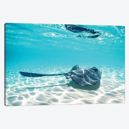 Underwater Ray Reef Snorkelling Canvas Print #JVO219} by James Vodicka Canvas Artwork
