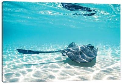 Underwater Ray Reef Snorkelling Canvas Art Print