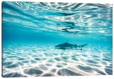 Underwater Reef Shark Shallow Water Canvas Art Print