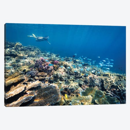 Underwater Reef with Snorkelling Girl Canvas Print #JVO221} by James Vodicka Canvas Art Print