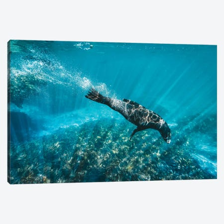 Underwater Sea Lion With Light Rays Canvas Print #JVO222} by James Vodicka Art Print