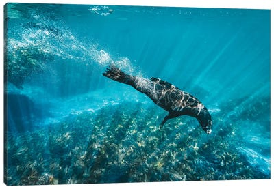 Underwater Sea Lion With Light Rays Canvas Art Print