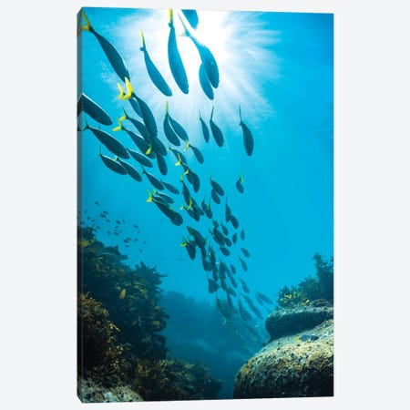Underwater Sydney Canvas Print #JVO223} by James Vodicka Canvas Print