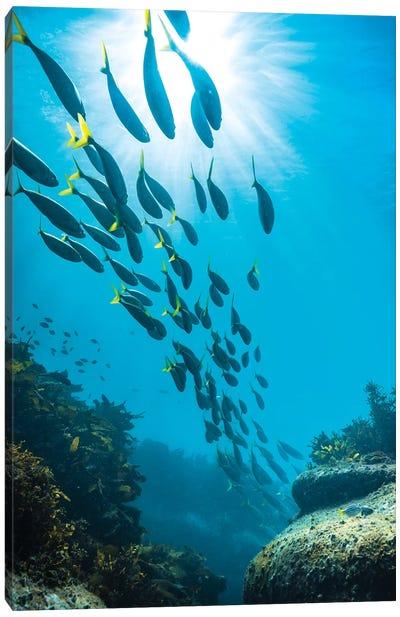 Underwater Sydney Canvas Art Print
