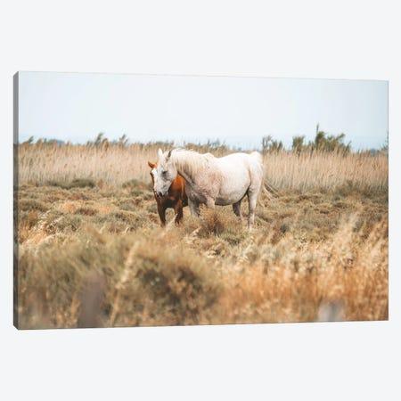 Camargue Wild Horses Canvas Print #JVO23} by James Vodicka Canvas Artwork