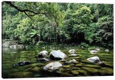 Daintree Rainforest Calm River Landscape Canvas Art Print
