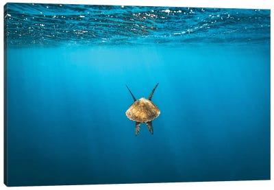 Following Golden Turtle Underwater Canvas Art Print