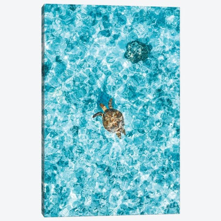 Aerial Great Barrier Reef Island Turtle Canvas Print #JVO3} by James Vodicka Canvas Wall Art