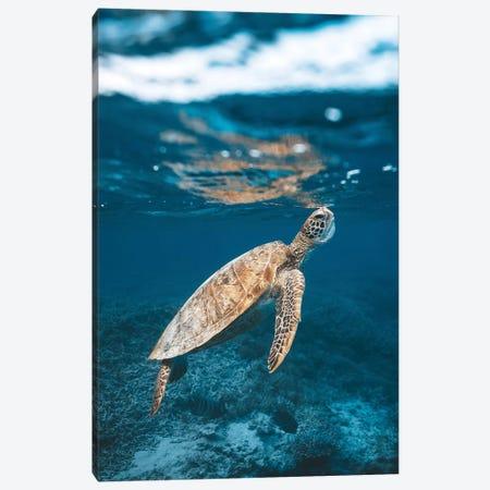 Great Barrier Reef Turtle Underwater Canvas Print #JVO44} by James Vodicka Canvas Print