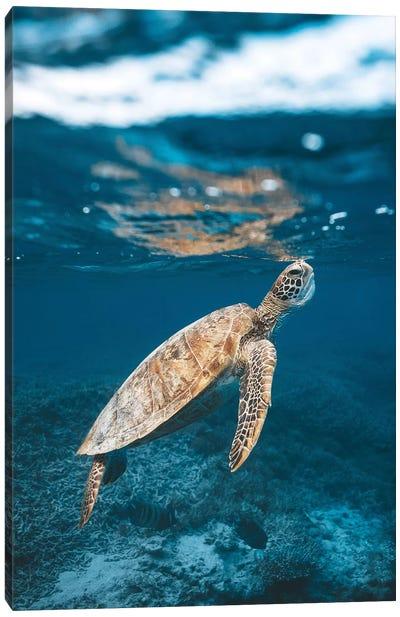 Great Barrier Reef Turtle Underwater Canvas Art Print