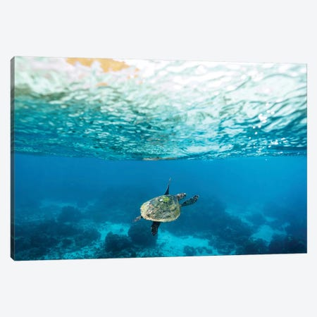 Green Sea Turtle Under The Surface Canvas Print #JVO45} by James Vodicka Art Print