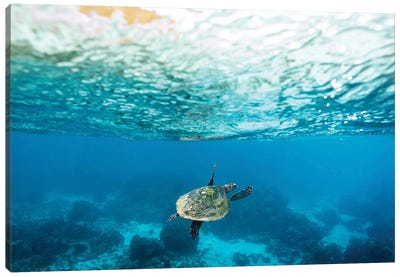 Green Sea Turtle Under The Surface Canvas Art Print
