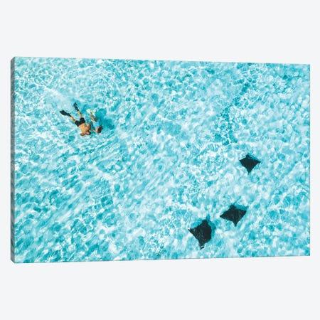 Heron Island Aerial Snorkellers Eagle rays Canvas Print #JVO47} by James Vodicka Canvas Print