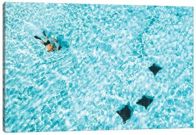 Heron Island Aerial Snorkellers Eagle rays Canvas Art Print