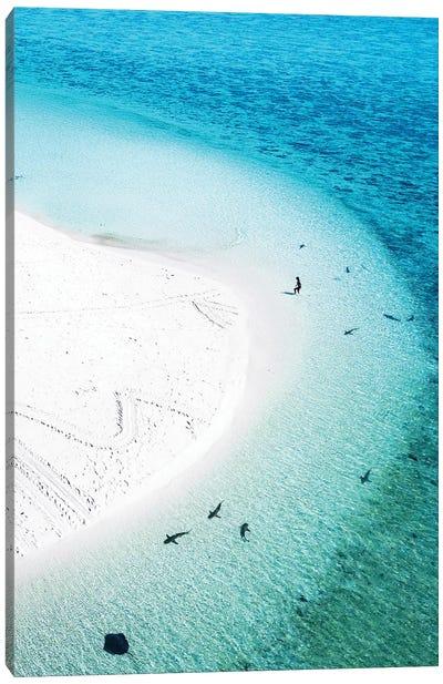 Aerial Island Landscape Beach Sharks Swimmer Canvas Art Print