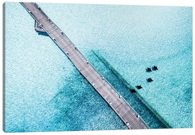 Island Jetty Aerial with Eagle Rays Canvas Art Print