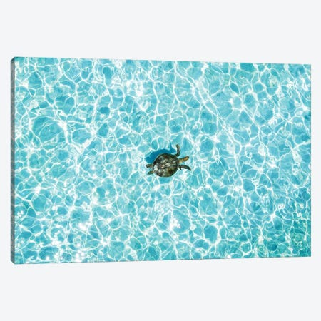 Aerial Turtle Calm Turquoise Water Canvas Print #JVO6} by James Vodicka Art Print