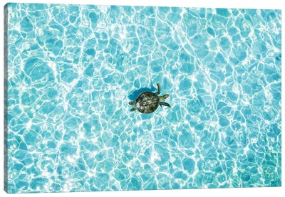 Aerial Turtle Calm Turquoise Water Canvas Art Print