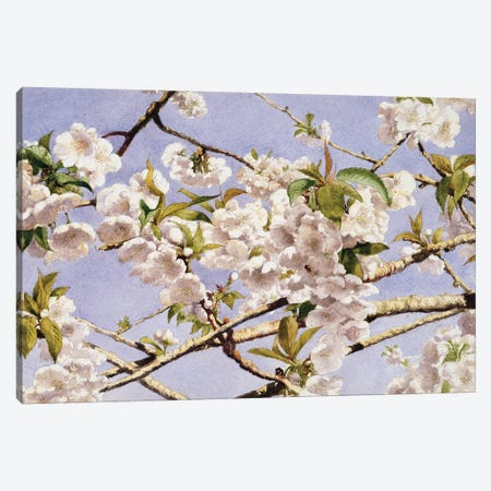 Apple Blossoms Canvas Print #JWH1} by John William Hill Canvas Wall Art