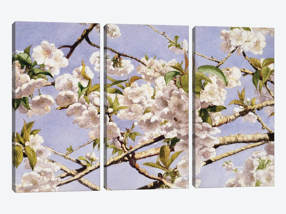 Apple Blossoms by John William Hill 3-piece Canvas Print