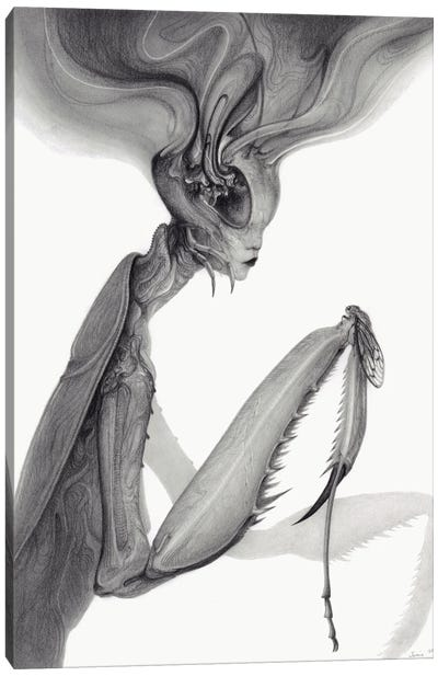 Mantis Canvas Art Print