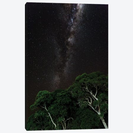 Light painted tree in the foreground with the Milky Way Galaxy in the Pantanal, Brazil 3-Piece Canvas #JWT1} by James White Canvas Art Print