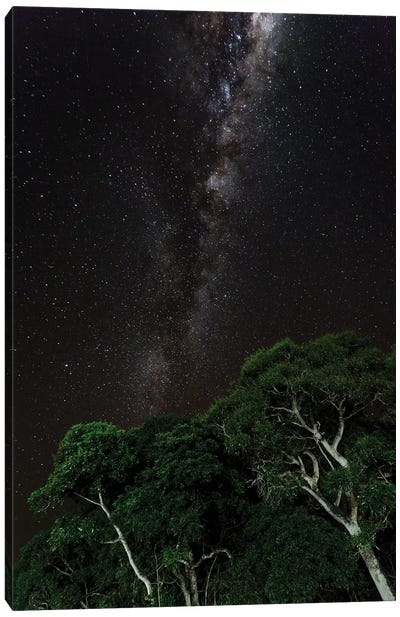 Light painted tree in the foreground with the Milky Way Galaxy in the Pantanal, Brazil Canvas Art Print